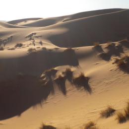 Viaggio nel deserto del Marocco