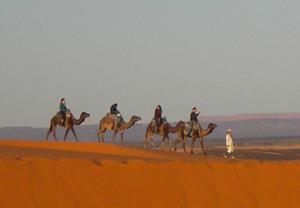 Passeggiate a cammello