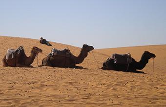 Escursioni Marocco Tour