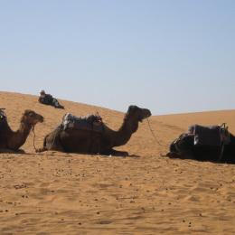Deserto Cammelli Tour Marocco