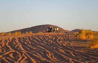 Cammello nel deserto