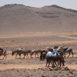 Marocco Tour Cammelli