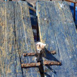Gatto tra due assi di legno blu a Essaouira